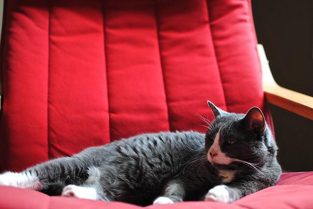 [68/365] Sulky Cat