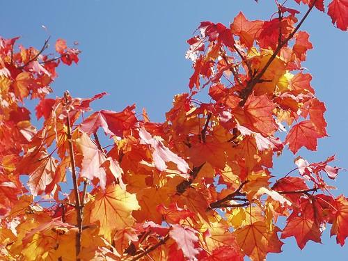 200810040047_autumn-colours
