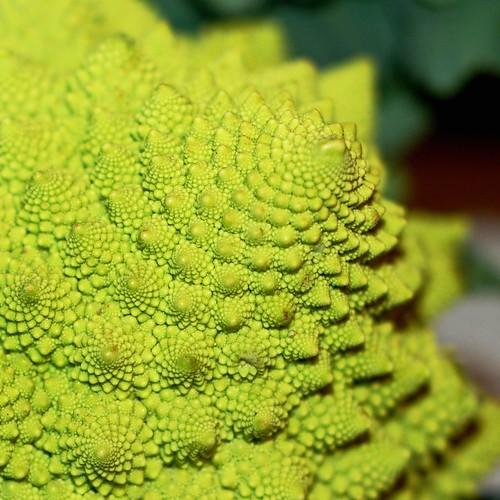 fractal veg!