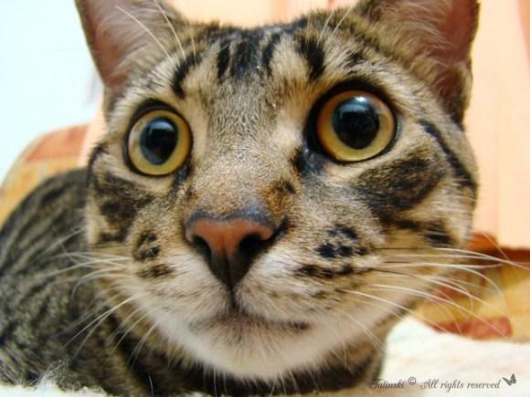 Big Nose and Big eyes!