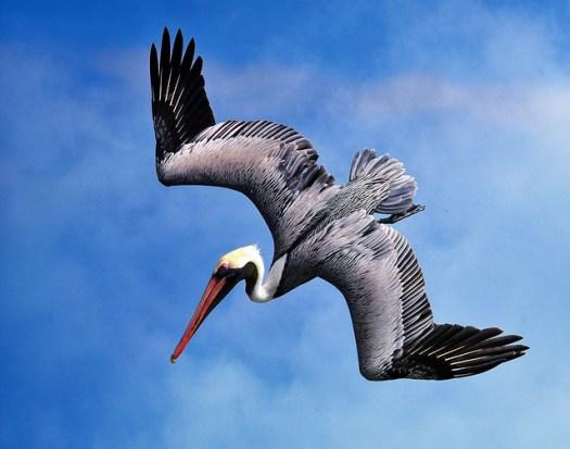 Pelican Reworked
