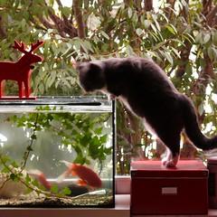 F = Fishtank (my moose, my fishes, my cat)