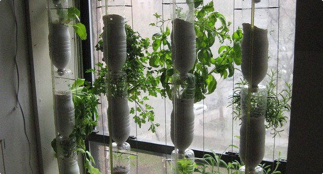 Window farm take 2