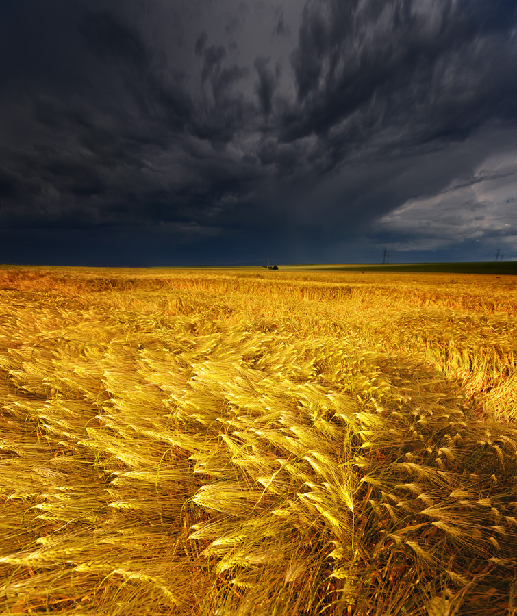 Beautiful Wheat Field