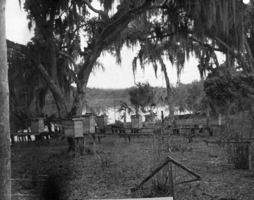 Beekeeper's hives on the Saint Johns River