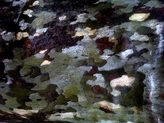 Misc-Fall-Foliage-2008-9