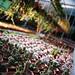 Cacti Farm