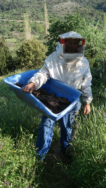 Kostas beekeeper in action
