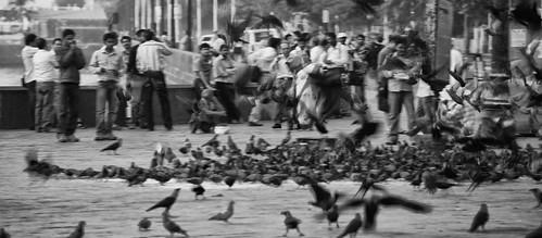 Pigeon Chaos
