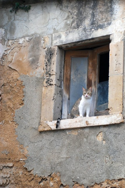 Cat in window, Noto, Sicily