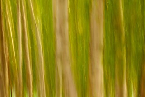 Green tree - canon t2i por @Doug88888