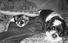 comfortable puppies