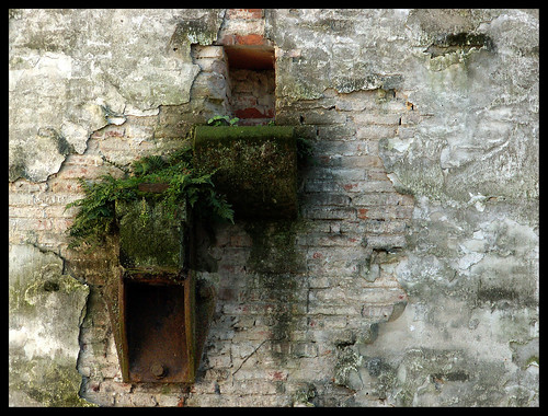 URBAN nature-another hole in the wall