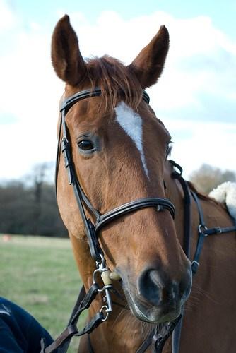 Horses, Horse Portrait