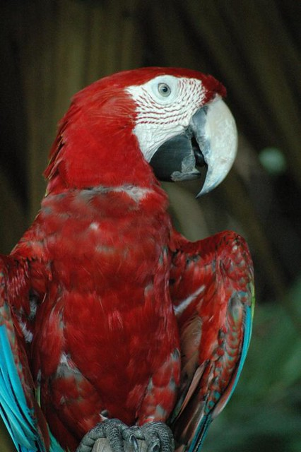 The psychedelic MACAWs