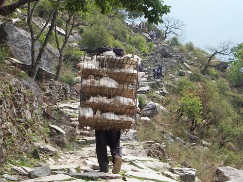 nepal 216