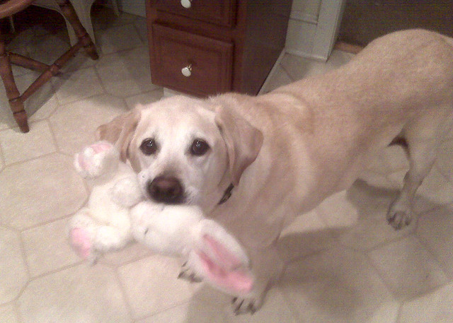 News Flash Dog Accused Of Eating The Easter Bunny