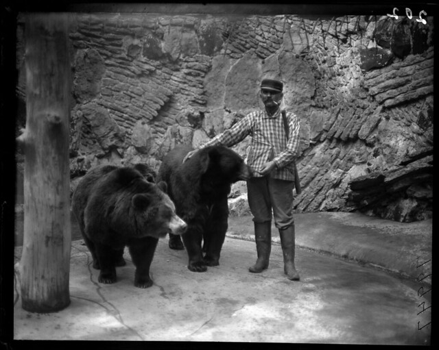 Zookeeper and bears