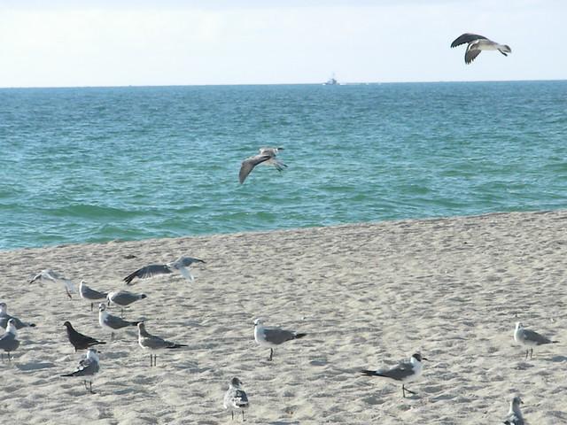 Haulover Beach 8.21.09