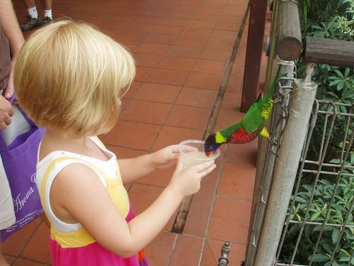 200907290990_Jurong-birdpark-lori-aviary
