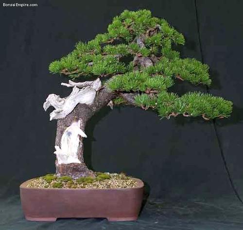 top-bonsai-gallery-l-61