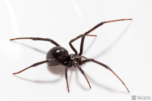 Black Widow 2 courtesy of Jeremy Hall