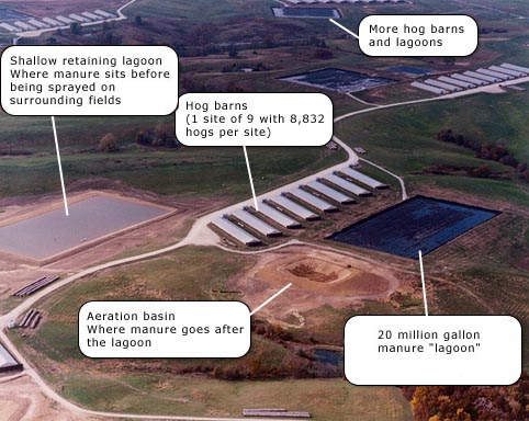 Aerial Photo of a Factory Farm