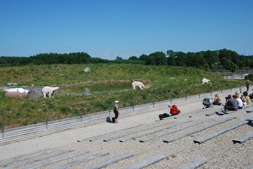 Eisbärenanlage im Skandinavisk Dyrepark