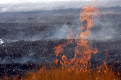 Anderson Mesa prescribed burn by Coconino National Forest