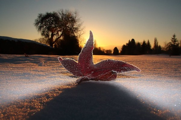 Leaf on a Frosty Morning