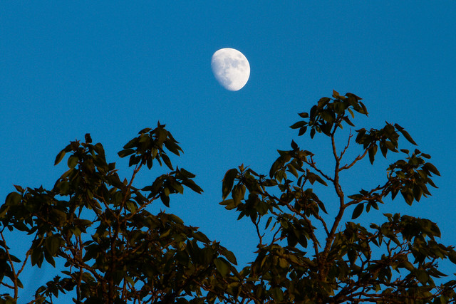 moon-color-3036.jpg