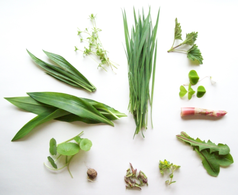 March harvest of wild plants