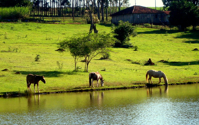 Horses in the Field of Peace