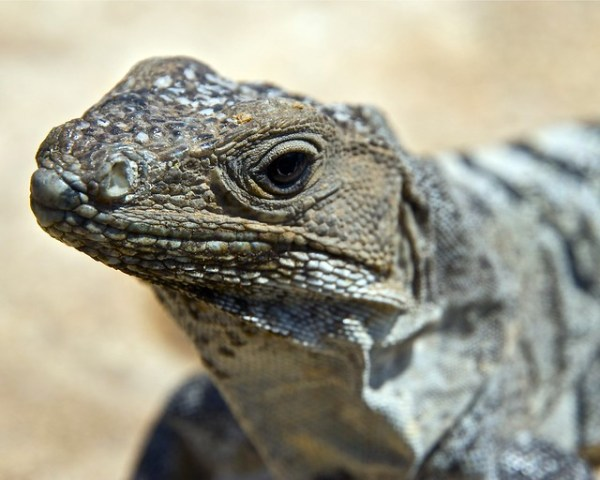 Lizard Face Pictures to Pin on Pinterest - ThePinsta