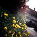 Perky yellow and Ye Olde Smokehouse