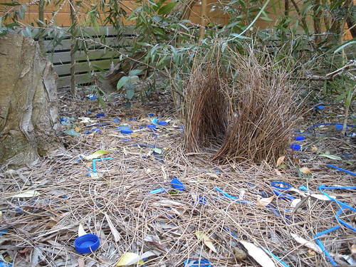 Bower Bird Nest by shie_scraper_of_death