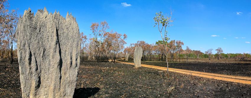 Termiten in der Landschaft