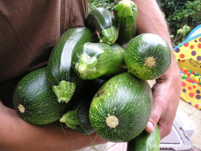 Organic Corgettes/Marrows