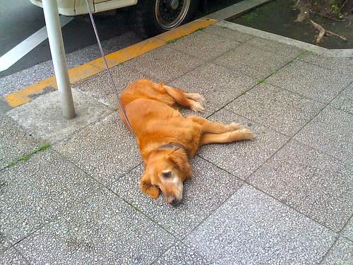 犬も疲れる。