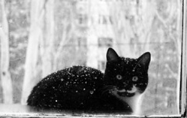 Avoiding hypothermia in cats - Portrait of a cat.