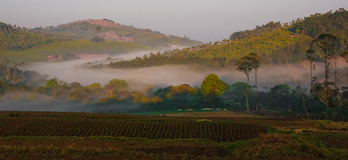 Early morning at Kotagiri, Tamilnadu