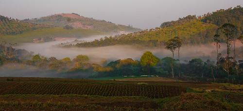 Early morning at Kotagiri, Tamilnadu