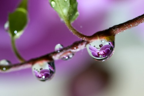 waterdrops I