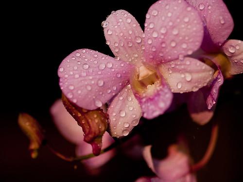 Backyard Orchids 3