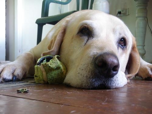 Dog seizure