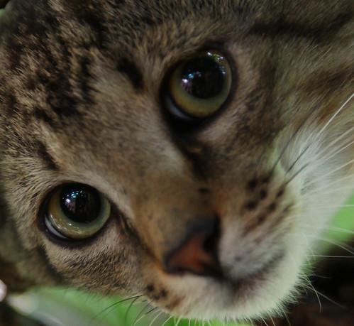 Cat - I
