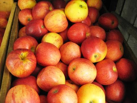 Apples Like These Were Shipped Back to Florida from the North