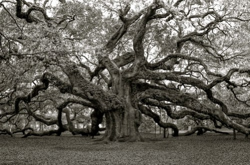 Angel Oak 2009 B&W HDR