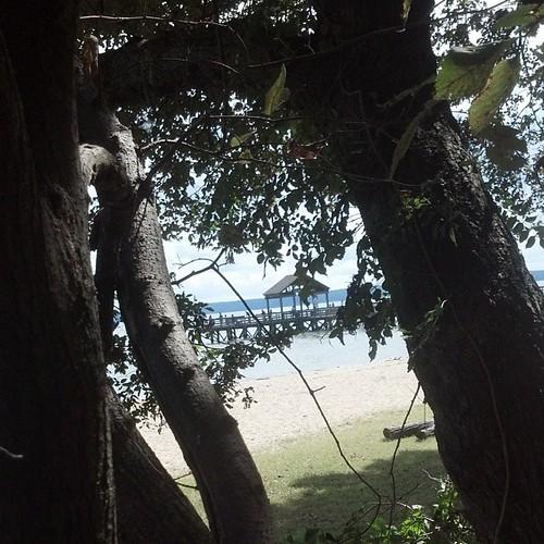 View While Nursing for September 29, 2013 - Fishing Pier Through Trees at Leesylvania State Park, Virginia