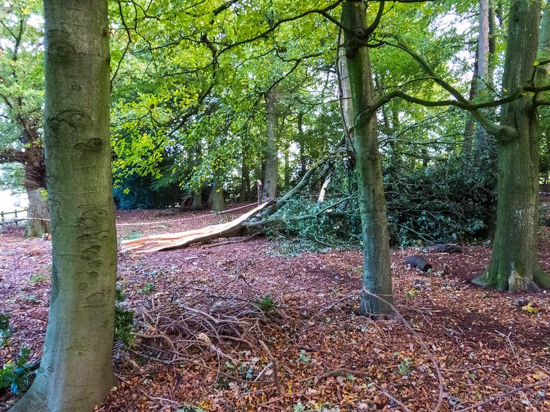 Fallen Tree in the Woodland Walk
